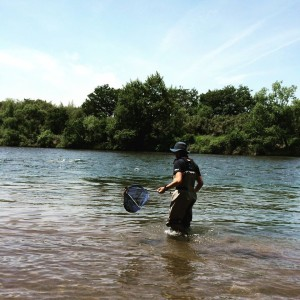 大きな川は、魚が自由に逃げられるし、追い込む場所がありません。疲れるだけです。。ガサガサよりも釣りがいいでしよう。
