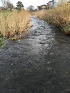 今日も増水中。