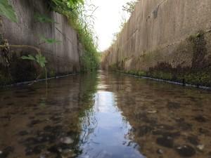 見事なコンクリ用水路