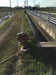水路でタニシを採取。慣れると上から覗いただけでタニシの種類の区別がつくらしい。