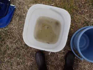 バケツに入れた水もこの有様。