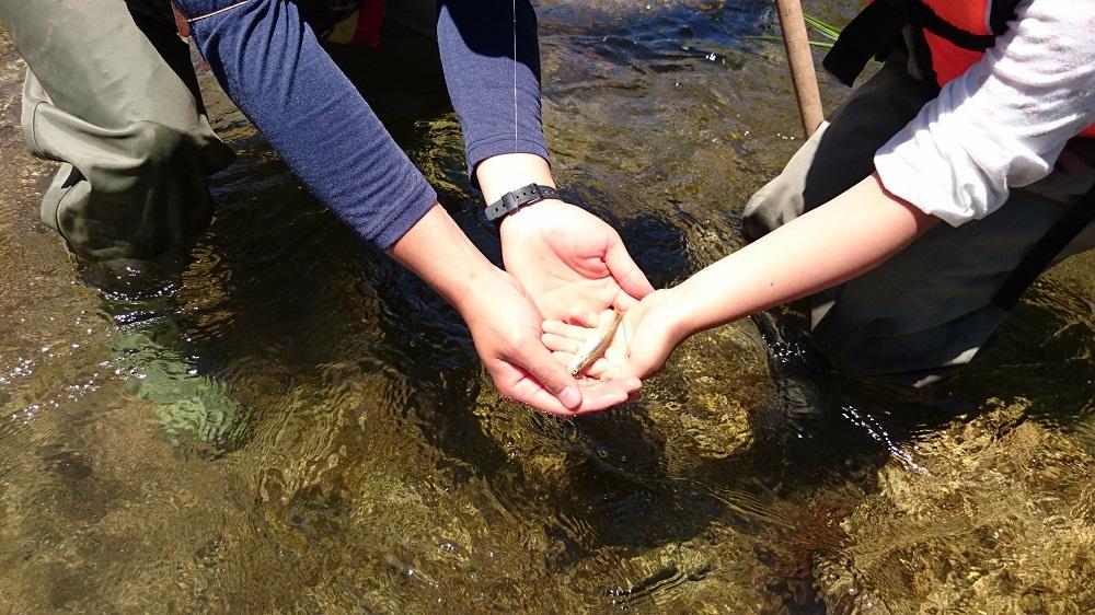 川遊び 子供